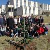 Castrovillari: messa a dimora di oltre 100 piante